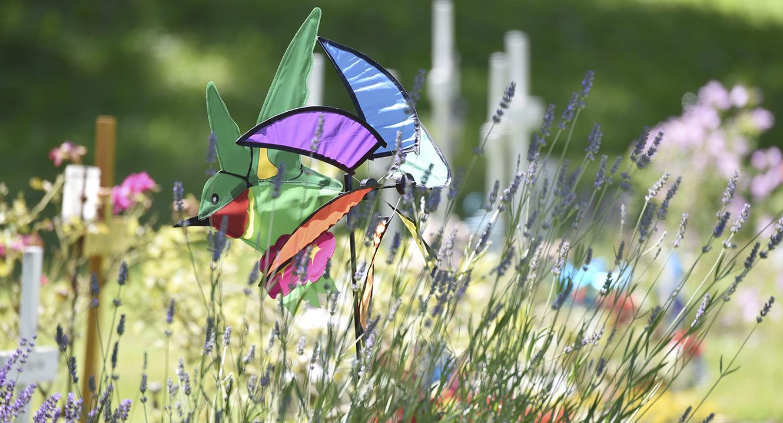 Schmetterling auf dem Schosshalden Friedhof in Bern.