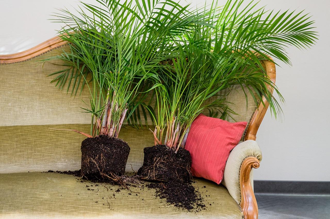 Topfpflanzen auf Sofa in Demenzklinik Sonnweid